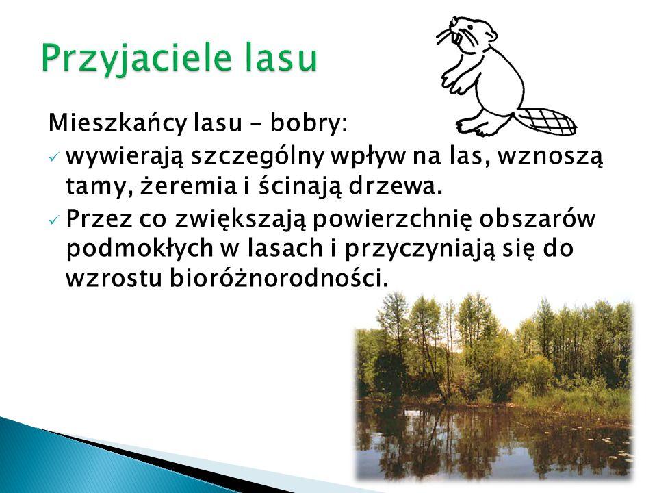 Przyjaciele lasu Mieszkańcy lasu – bobry: