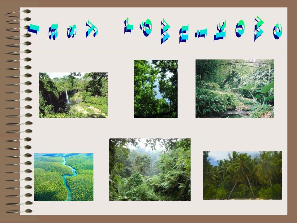 lasy równikowe