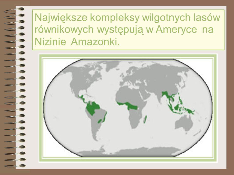Największe kompleksy wilgotnych lasów równikowych występują w Ameryce na Nizinie Amazonki.