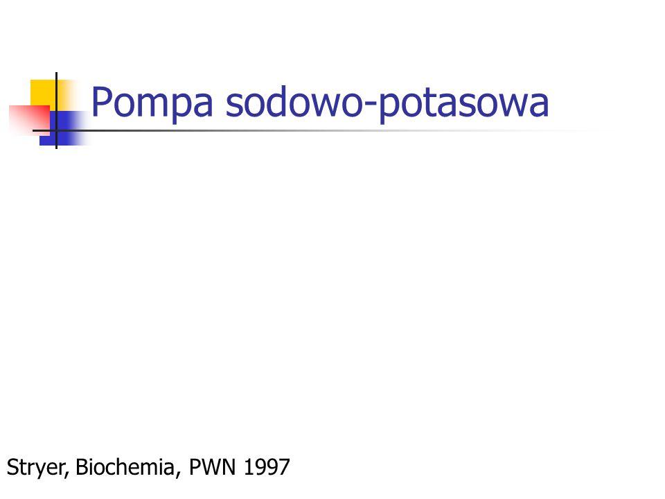 Pompa sodowo-potasowa