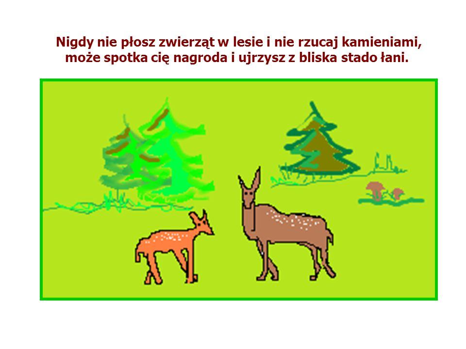 Nigdy nie płosz zwierząt w lesie i nie rzucaj kamieniami, może spotka cię nagroda i ujrzysz z bliska stado łani.