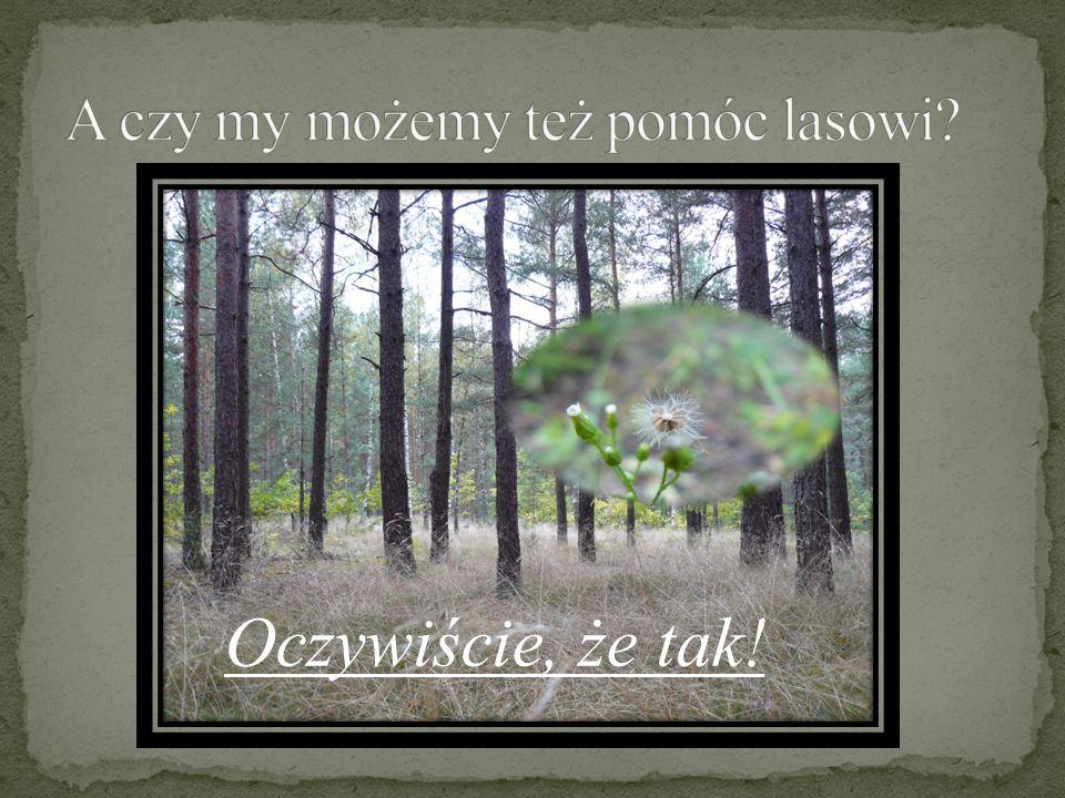 A czy my możemy też pomóc lasowi
