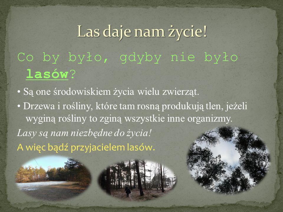 Las daje nam życie! Co by było, gdyby nie było lasów