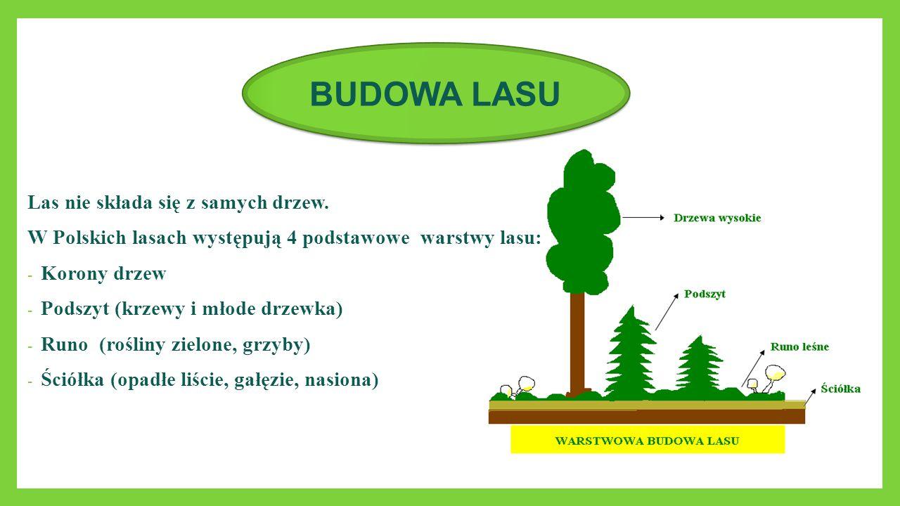 BUDOWA LASU Las nie składa się z samych drzew.