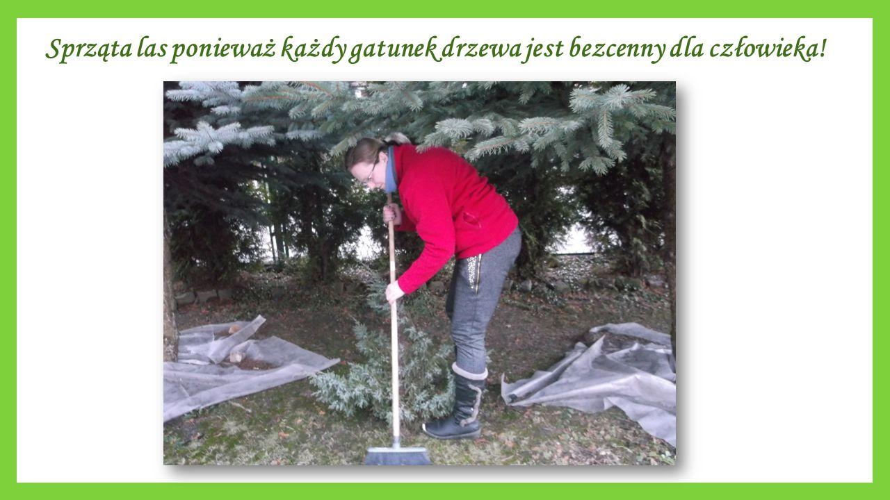 Sprząta las ponieważ każdy gatunek drzewa jest bezcenny dla człowieka!