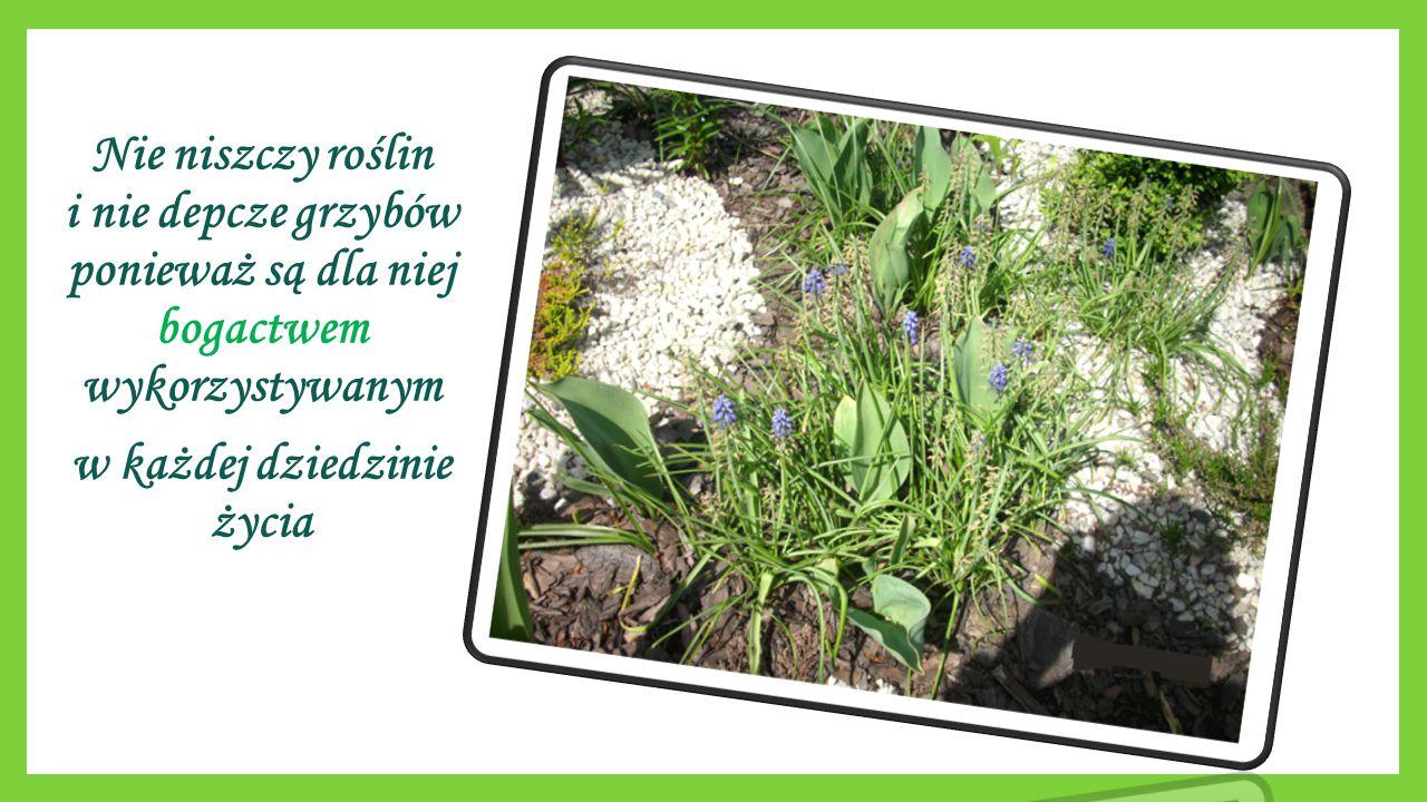 Nie niszczy roślin i nie depcze grzybów ponieważ są dla niej bogactwem wykorzystywanym w każdej dziedzinie życia