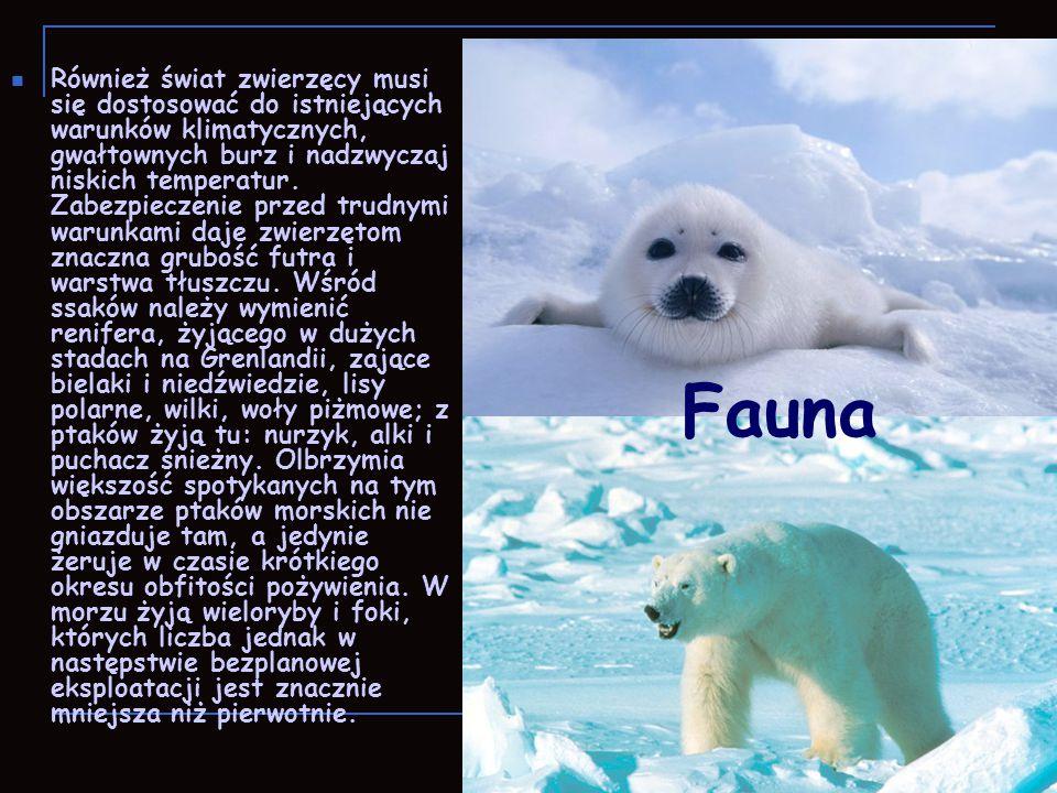Również świat zwierzęcy musi się dostosować do istniejących warunków klimatycznych, gwałtownych burz i nadzwyczaj niskich temperatur. Zabezpieczenie przed trudnymi warunkami daje zwierzętom znaczna grubość futra i warstwa tłuszczu. Wśród ssaków należy wymienić renifera, żyjącego w dużych stadach na Grenlandii, zające bielaki i niedźwiedzie, lisy polarne, wilki, woły piżmowe; z ptaków żyją tu: nurzyk, alki i puchacz śnieżny. Olbrzymia większość spotykanych na tym obszarze ptaków morskich nie gniazduje tam, a jedynie żeruje w czasie krótkiego okresu obfitości pożywienia. W morzu żyją wieloryby i foki, których liczba jednak w następstwie bezplanowej eksploatacji jest znacznie mniejsza niż pierwotnie.