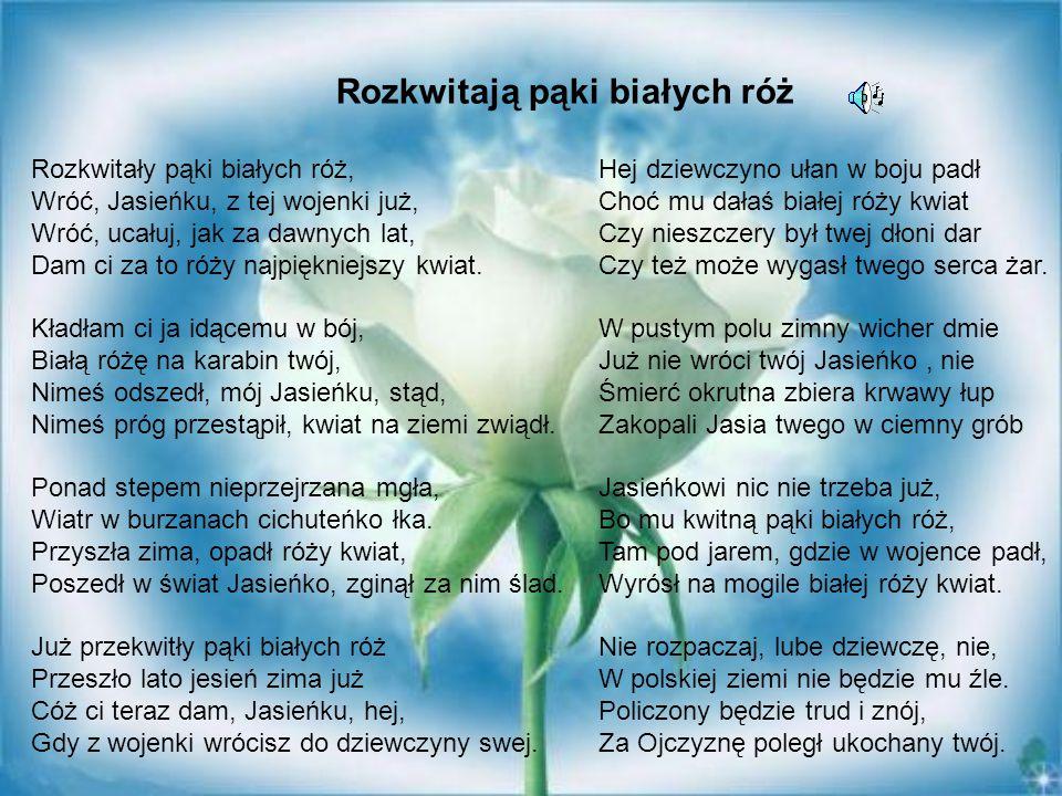 Rozkwitają pąki białych róż