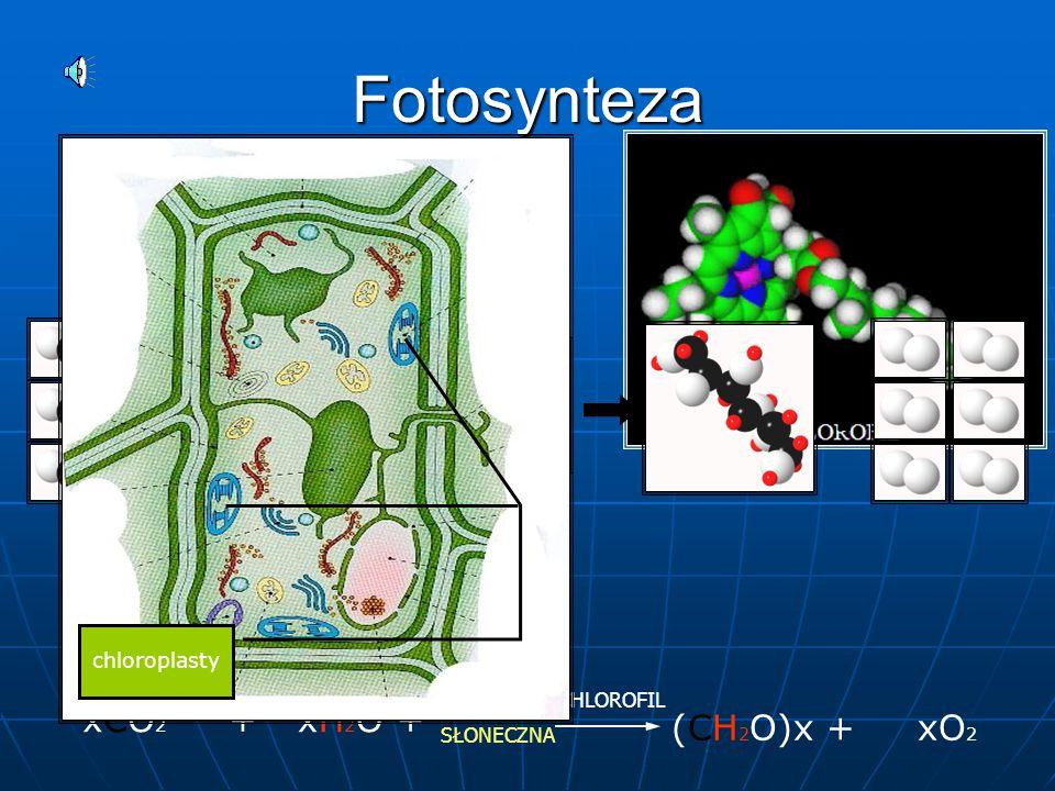 Fotosynteza xCO2 + (CH2O)x + xO2 xH2O + chloroplasty CHLOROFIL