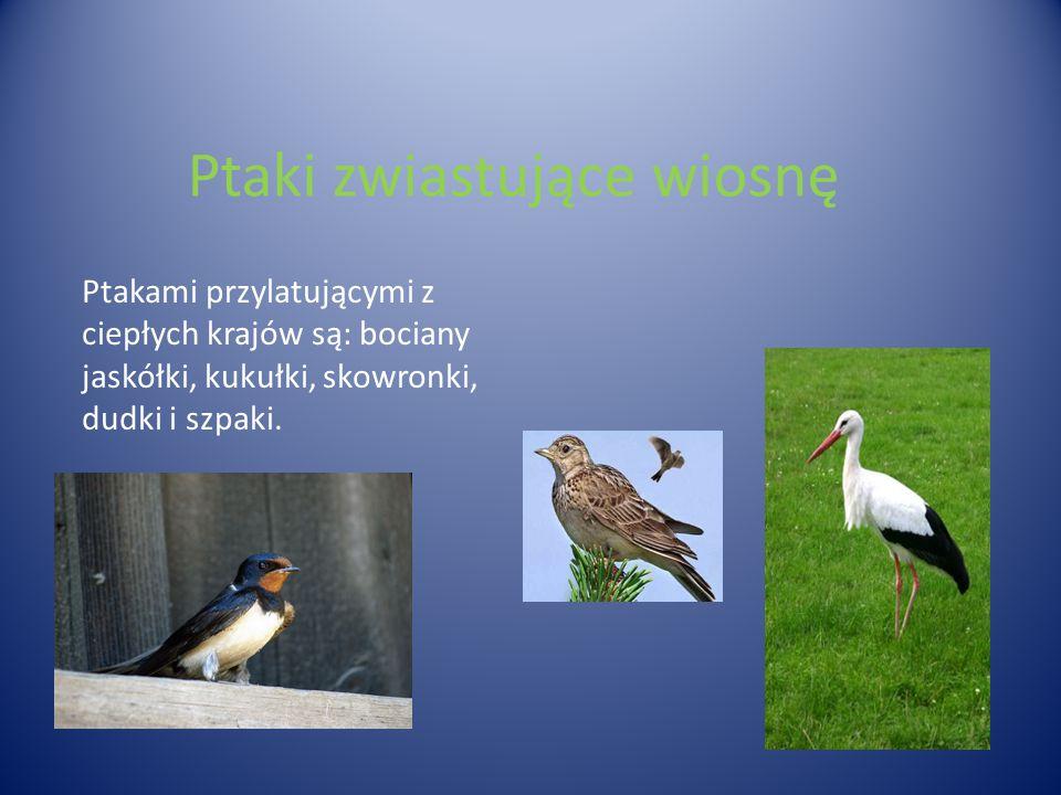 Ptaki zwiastujące wiosnę