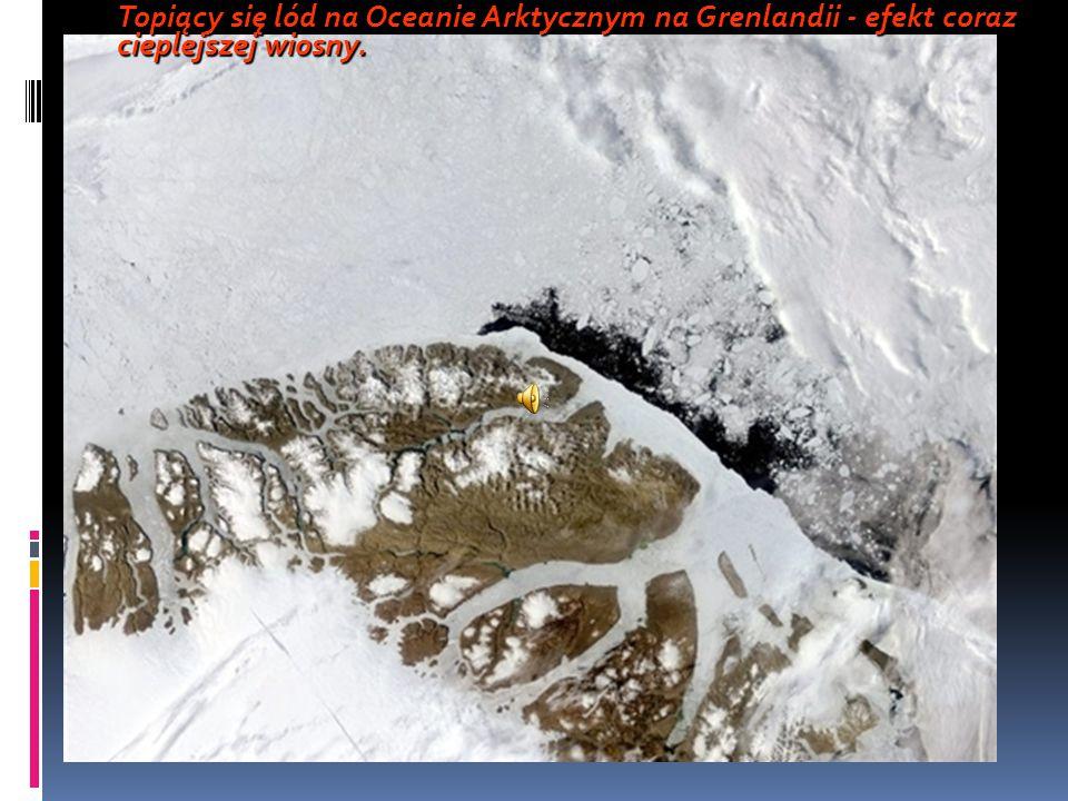 Topiący się lód na Oceanie Arktycznym na Grenlandii - efekt coraz cieplejszej wiosny.