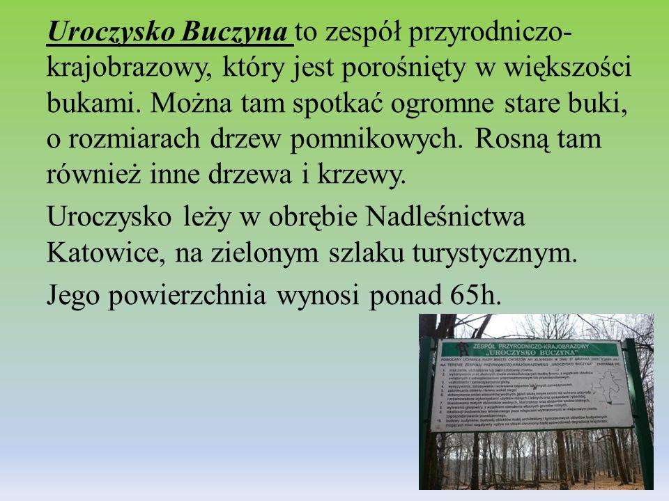 Uroczysko Buczyna to zespół przyrodniczo-krajobrazowy, który jest porośnięty w większości bukami.