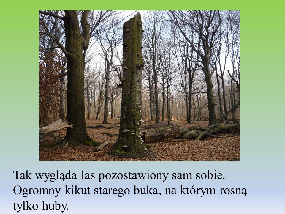 Tak wygląda las pozostawiony sam sobie