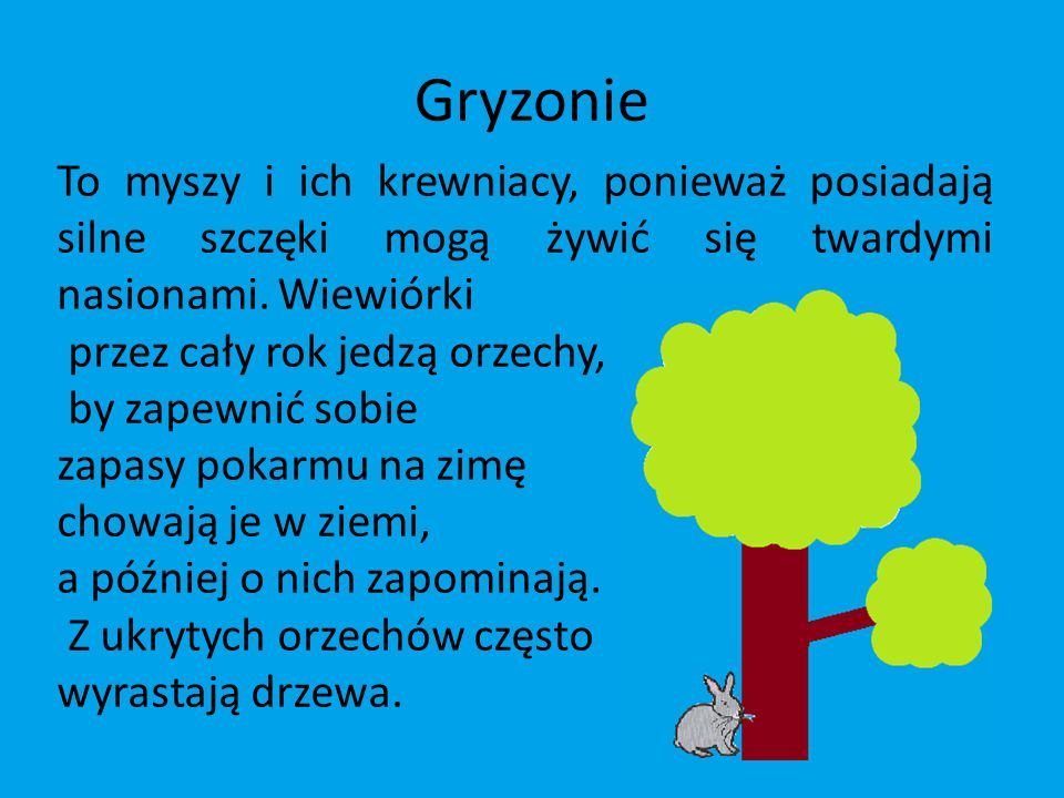 Gryzonie