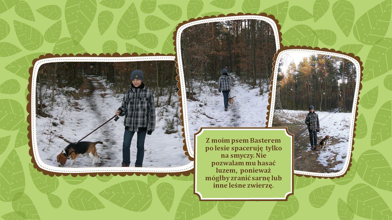 Z moim psem Basterem po lesie spaceruję tylko na smyczy