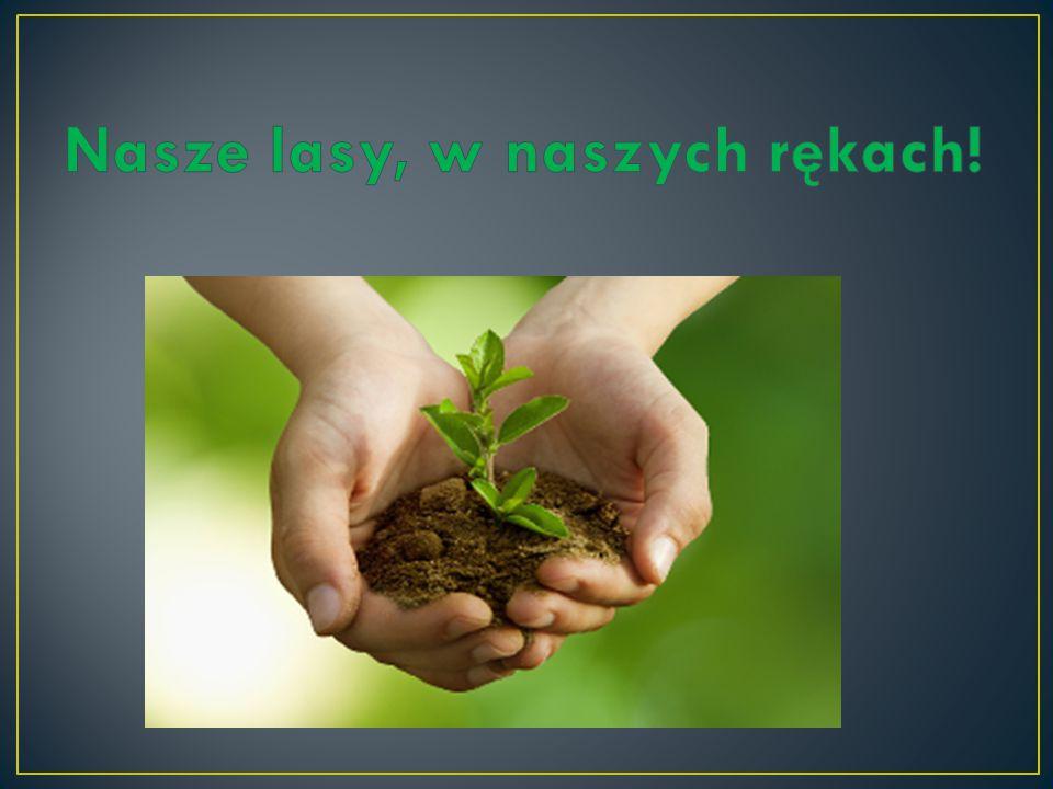 Nasze lasy, w naszych rękach!