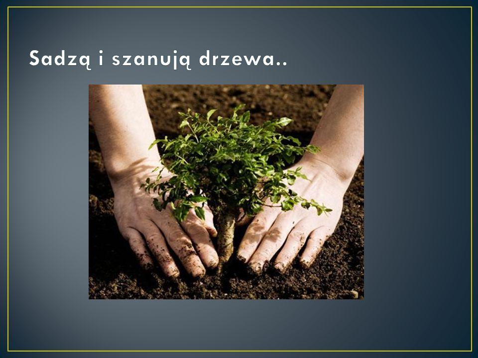 Sadzą i szanują drzewa..