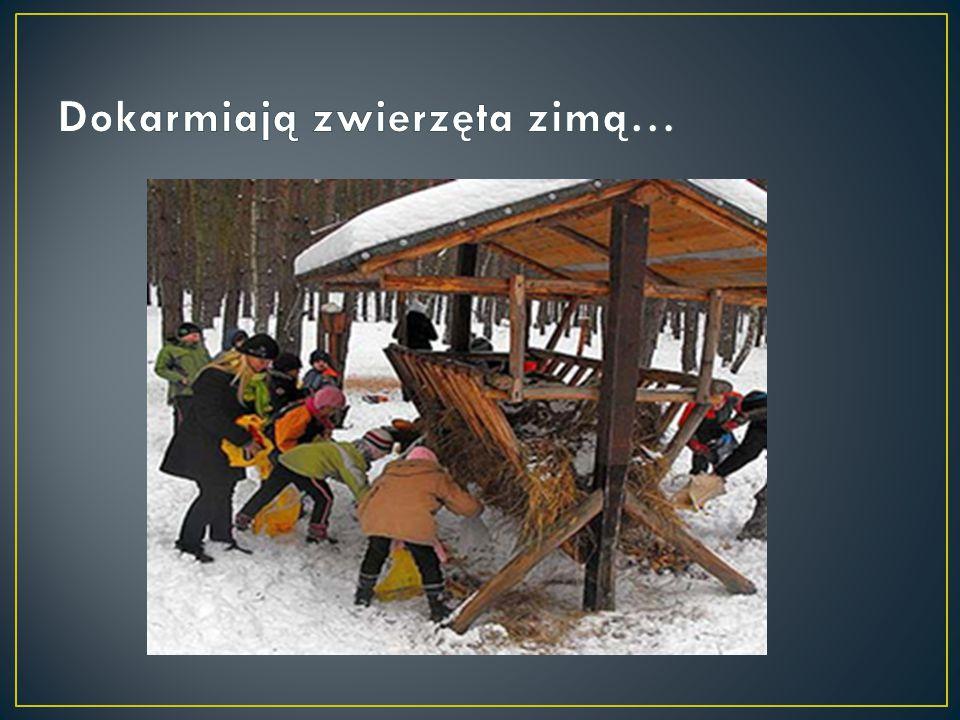 Dokarmiają zwierzęta zimą…