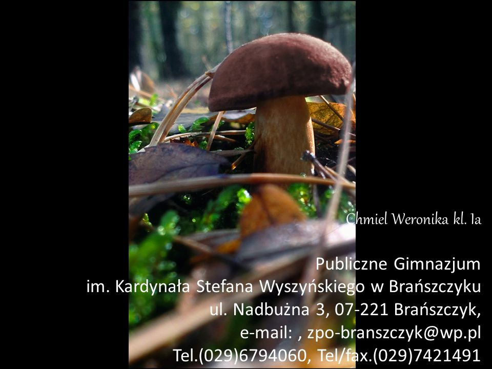 Chmiel Weronika kl. Ia Publiczne Gimnazjum. im. Kardynała Stefana Wyszyńskiego w Brańszczyku. ul. Nadbużna 3, 07-221 Brańszczyk,