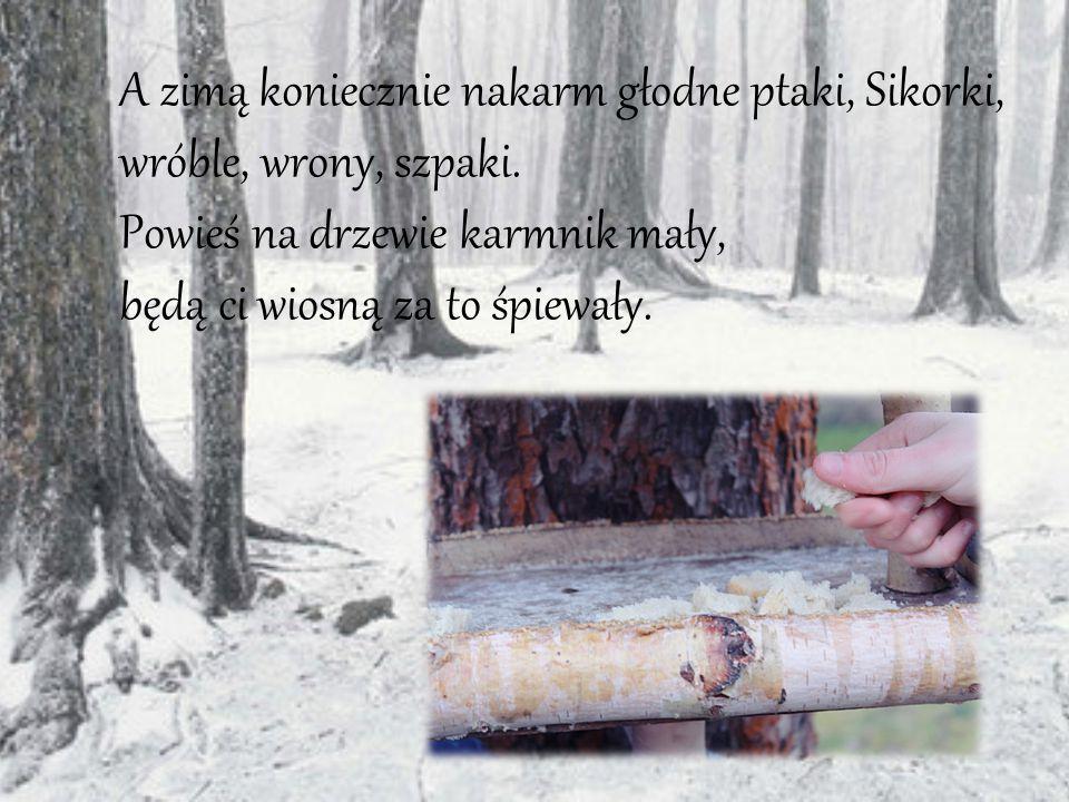 A zimą koniecznie nakarm głodne ptaki, Sikorki, wróble, wrony, szpaki