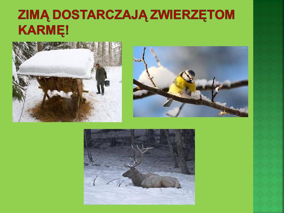 Zimą dostarczają zwierzętom karmę!