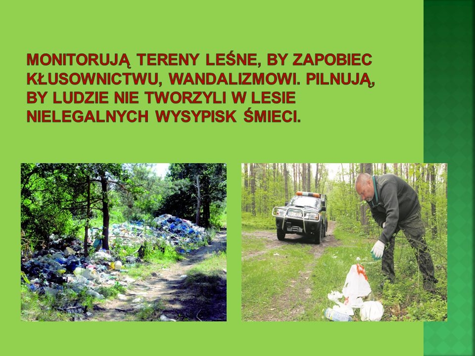 Monitorują tereny leśne, by zapobiec kłusownictwu, wandalizmowi