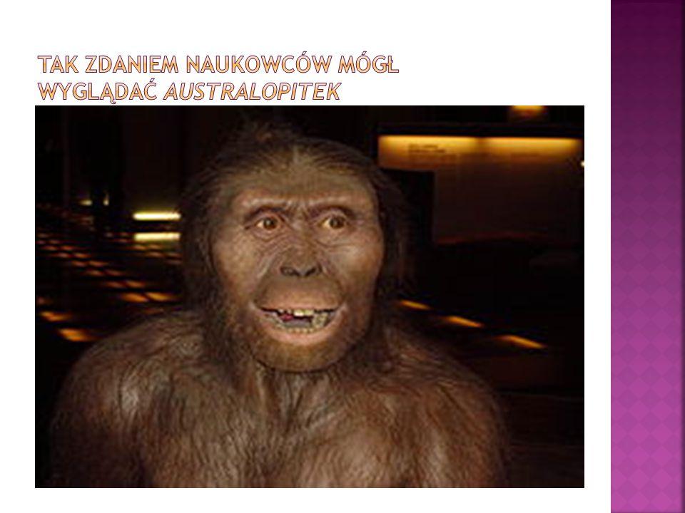 Tak zdaniem naukowców mógł wyglądać australopitek