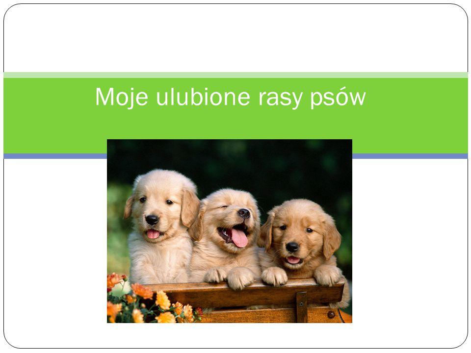 Moje ulubione rasy psów