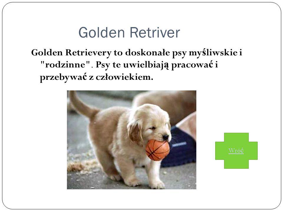 Golden Retriver Golden Retrievery to doskonałe psy myśliwskie i rodzinne . Psy te uwielbiają pracować i przebywać z człowiekiem.