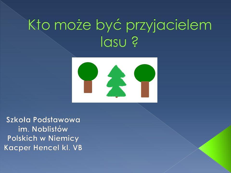 Kto może być przyjacielem lasu