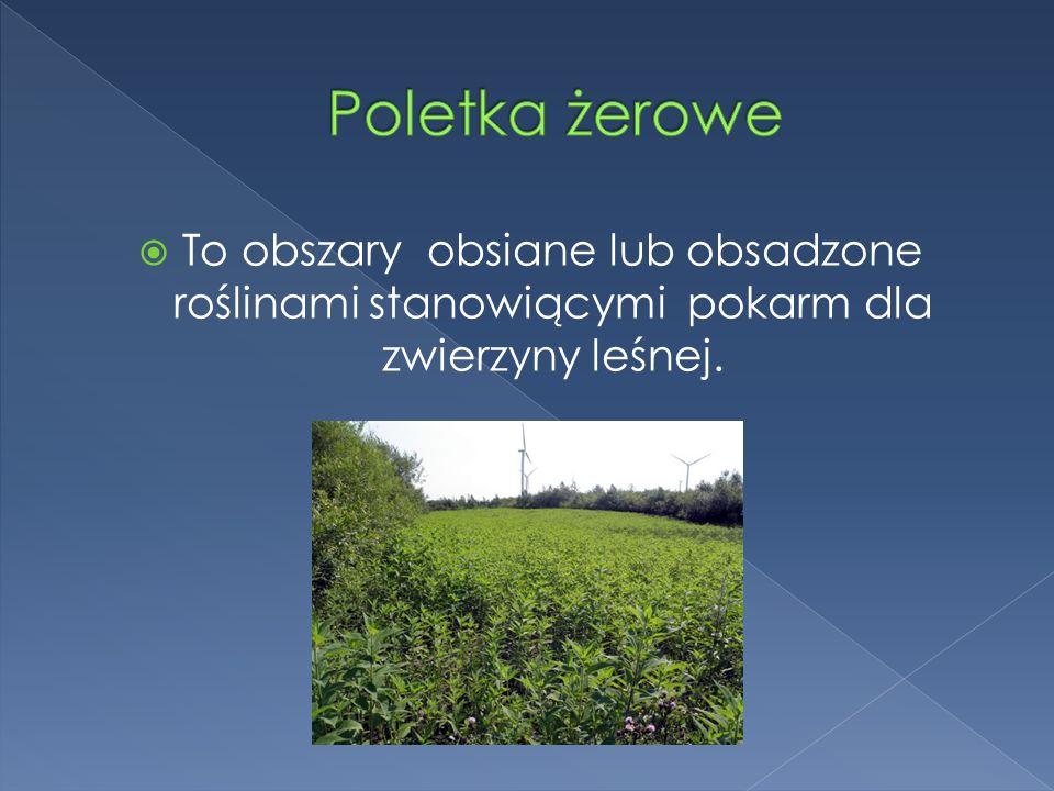 Poletka żerowe To obszary obsiane lub obsadzone roślinami stanowiącymi pokarm dla zwierzyny leśnej.