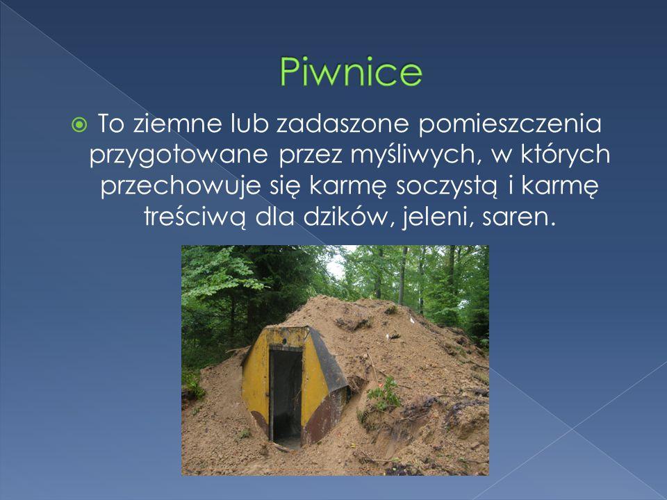 Piwnice