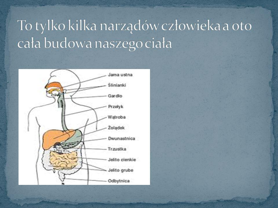 To tylko kilka narządów człowieka a oto cała budowa naszego ciała