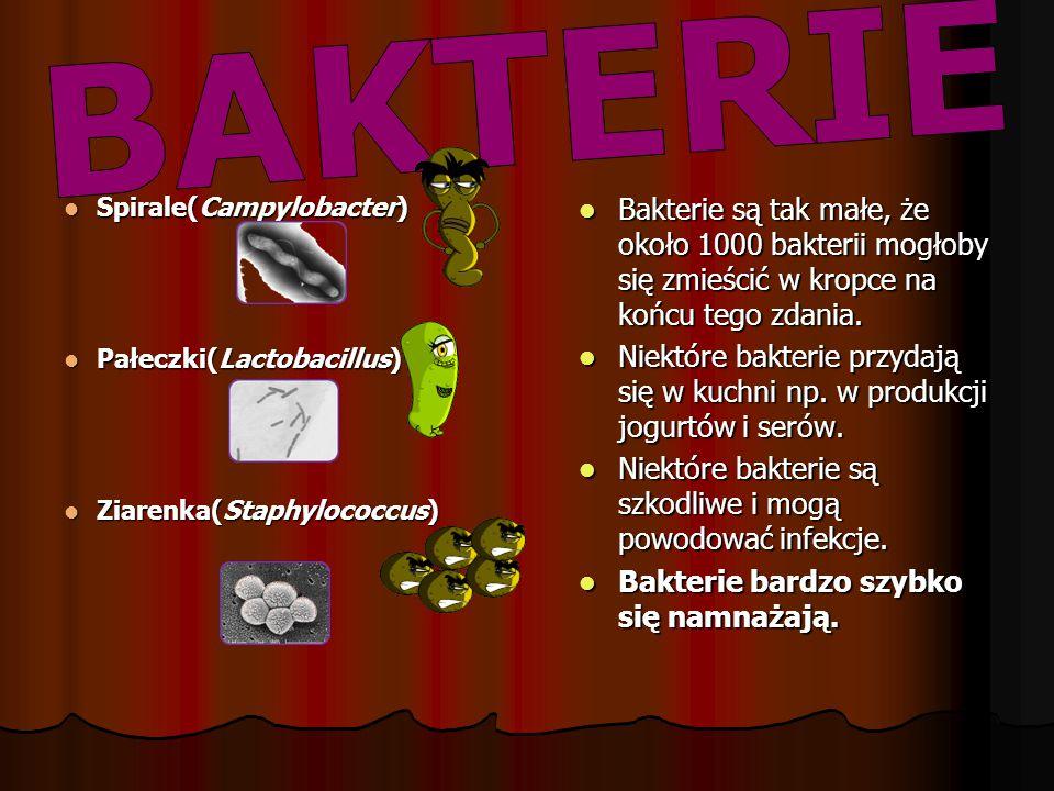 Niektóre bakterie są szkodliwe i mogą powodować infekcje.