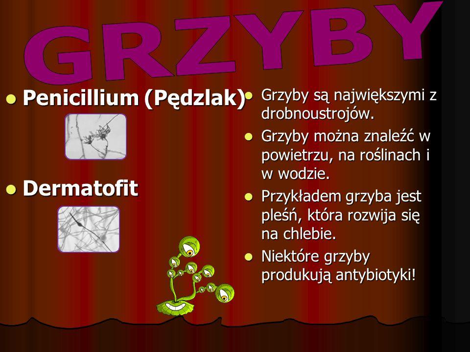 Penicillium (Pędzlak)
