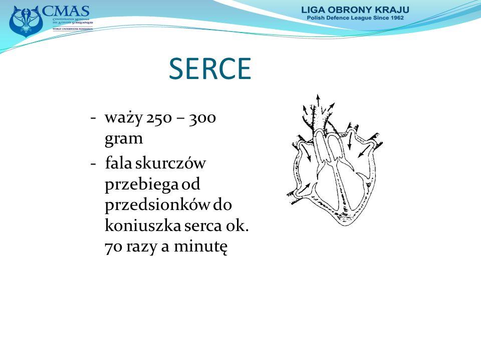 SERCE - waży 250 – 300 gram. - fala skurczów przebiega od przedsionków do koniuszka serca ok.