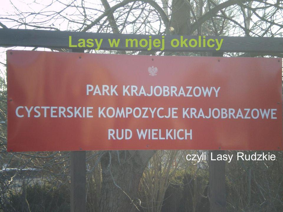 Lasy w mojej okolicy czyli Lasy Rudzkie