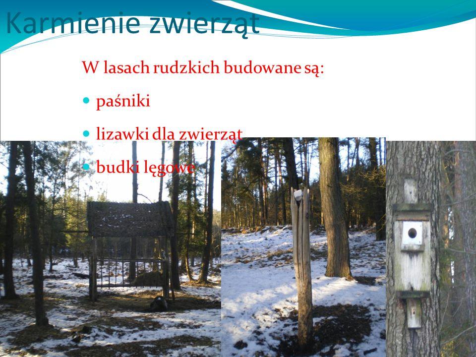 Karmienie zwierząt W lasach rudzkich budowane są: paśniki