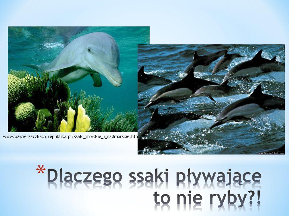 Dlaczego ssaki pływające to nie ryby !