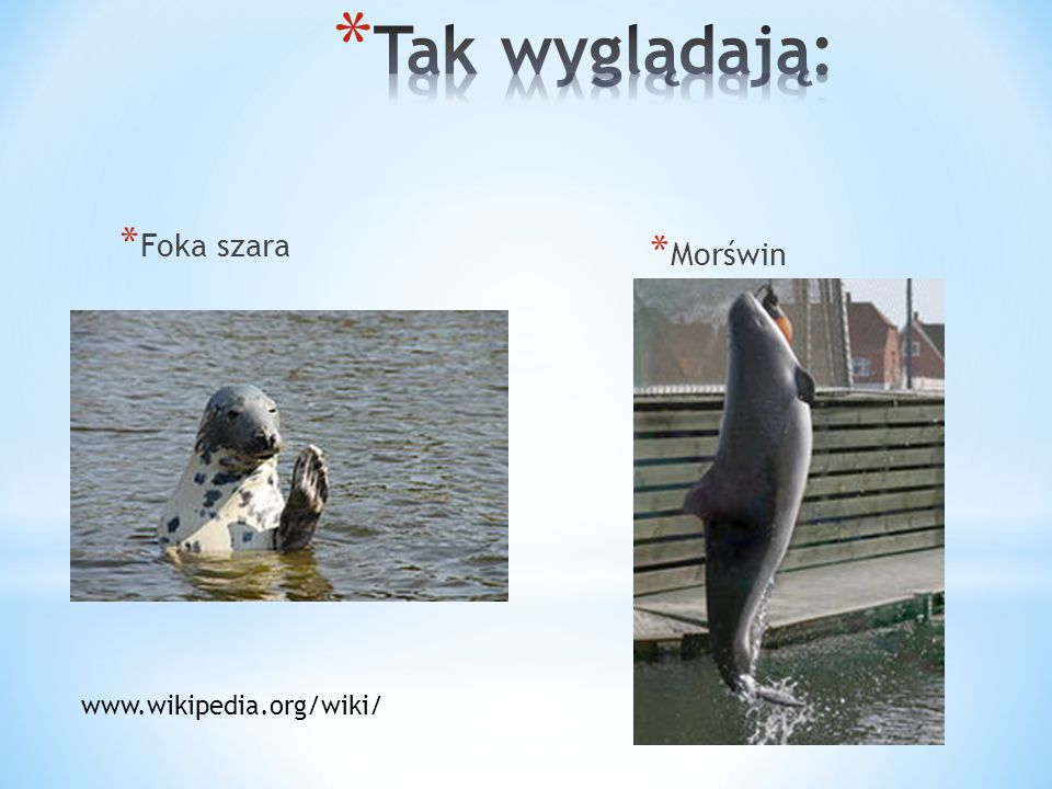 Tak wyglądają: Foka szara Morświn www.wikipedia.org/wiki/