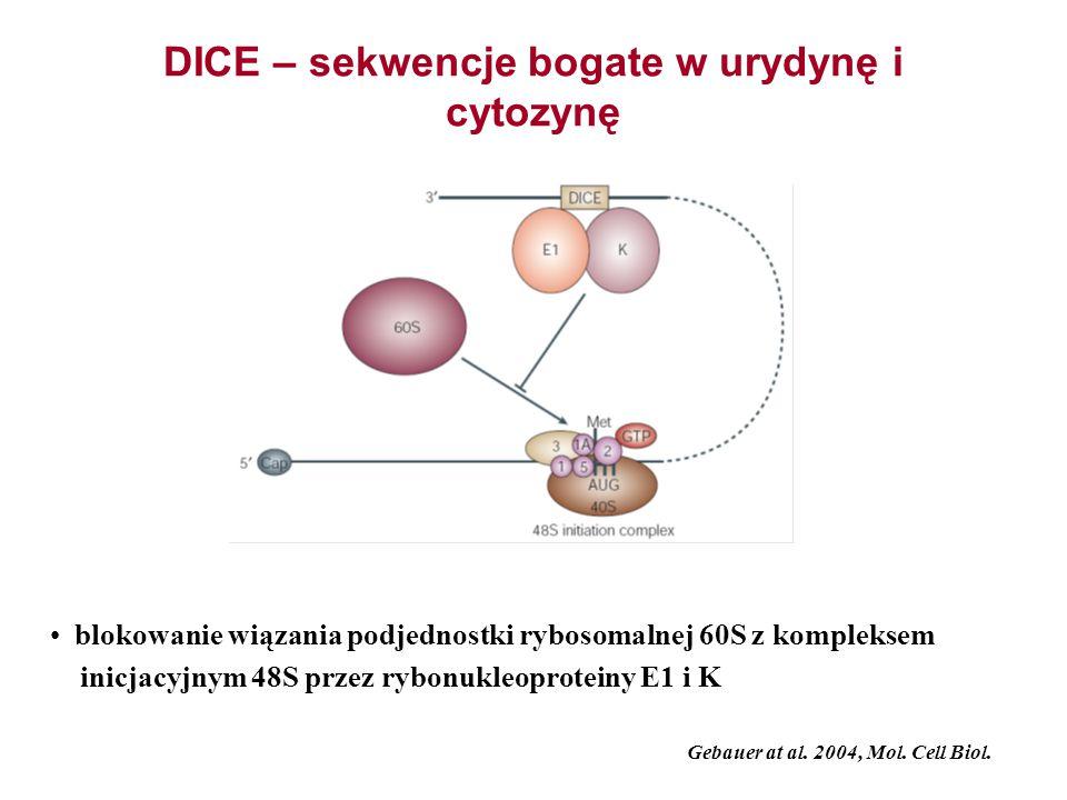 DICE – sekwencje bogate w urydynę i cytozynę