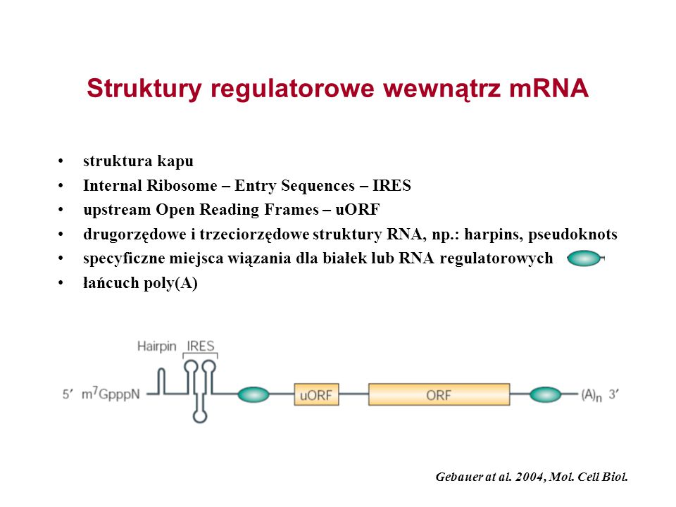 Struktury regulatorowe wewnątrz mRNA