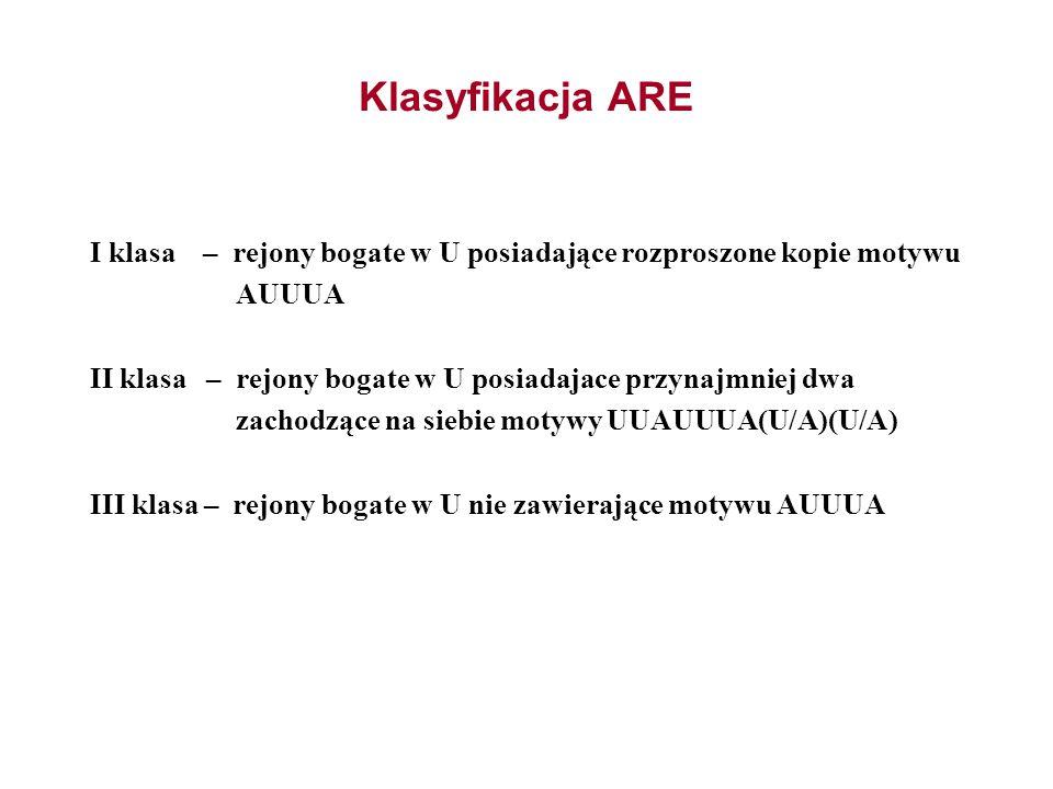 Klasyfikacja ARE I klasa – rejony bogate w U posiadające rozproszone kopie motywu. AUUUA.