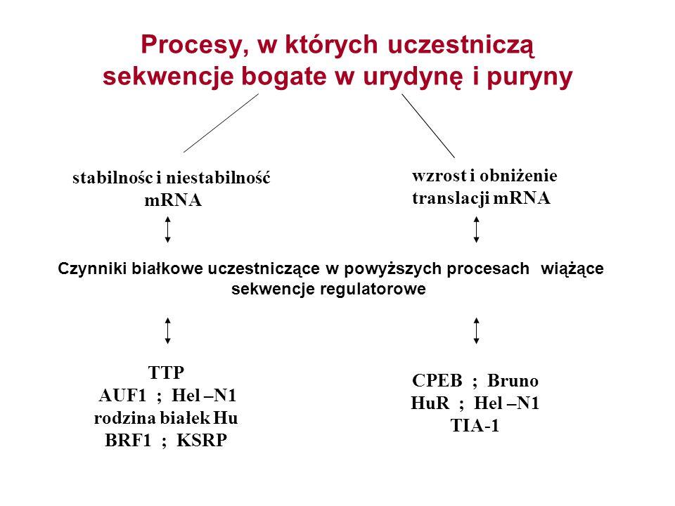 Procesy, w których uczestniczą sekwencje bogate w urydynę i puryny
