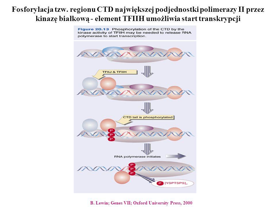 Fosforylacja tzw. regionu CTD największej podjednostki polimerazy II przez kinazę białkową - element TFIIH umożliwia start transkrypcji