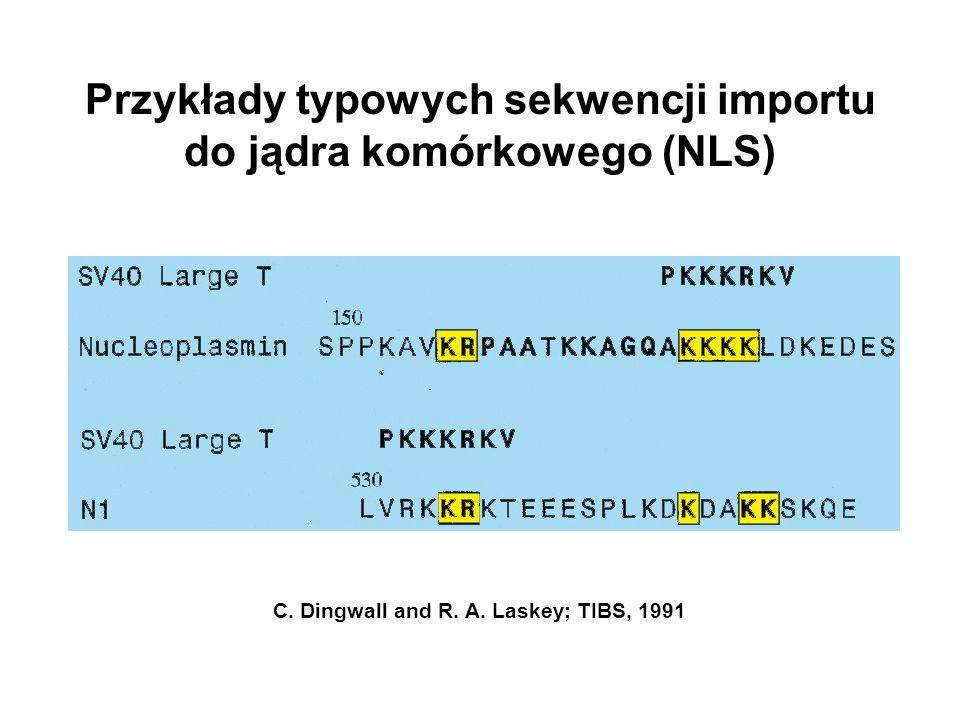 Przykłady typowych sekwencji importu do jądra komórkowego (NLS)