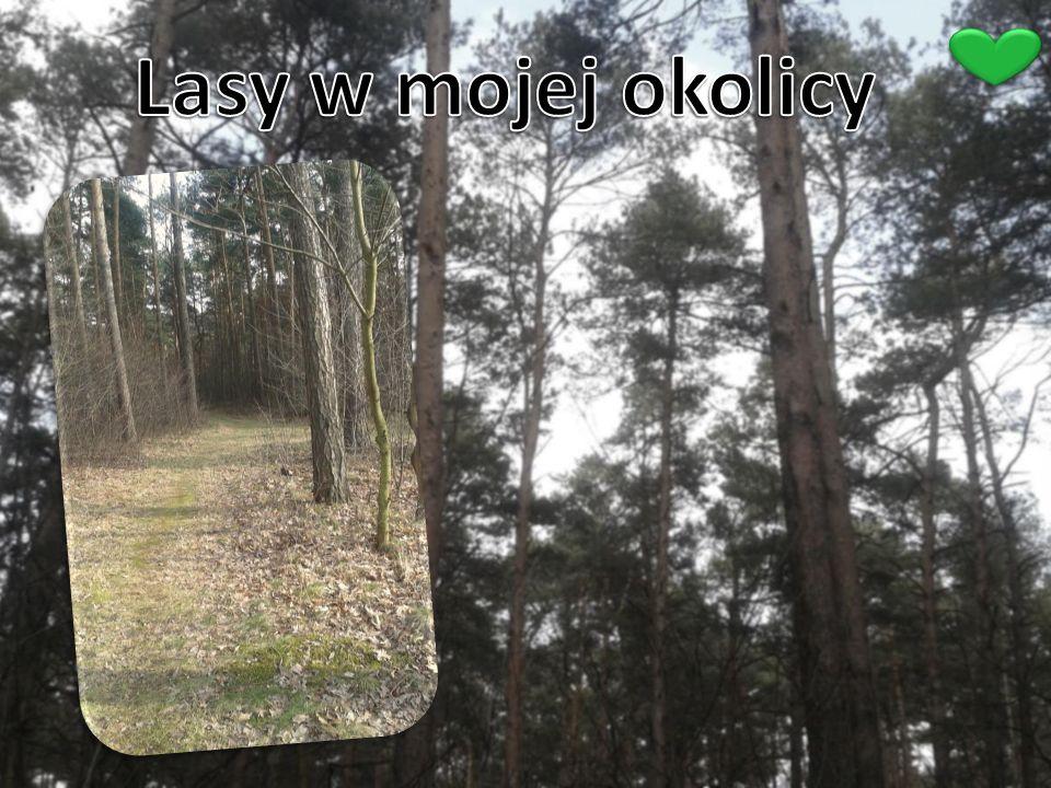 Lasy w mojej okolicy