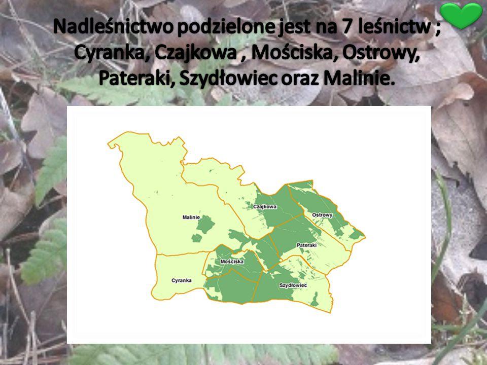 Nadleśnictwo podzielone jest na 7 leśnictw ; Cyranka, Czajkowa , Mościska, Ostrowy, Pateraki, Szydłowiec oraz Malinie.