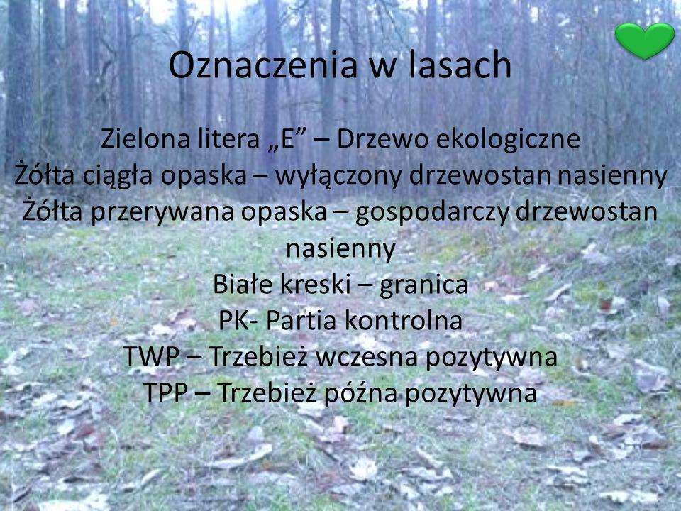 Oznaczenia w lasach
