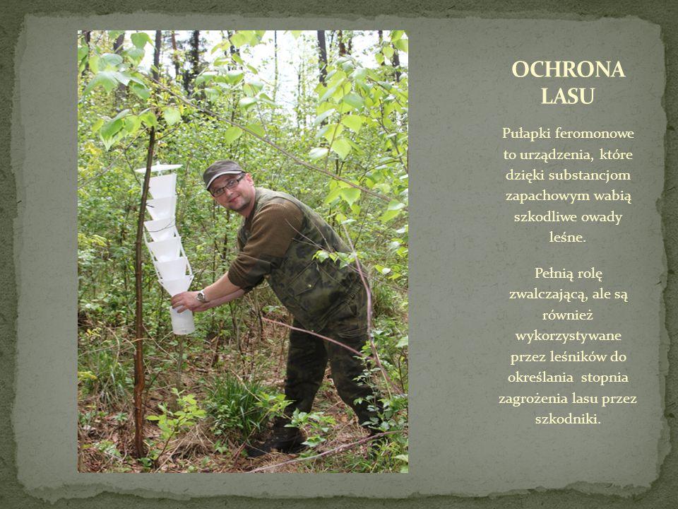 OCHRONA LASU Pułapki feromonowe to urządzenia, które dzięki substancjom zapachowym wabią szkodliwe owady leśne.